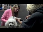 Candi Costa and Parker Costa Groom a Poodle at 911 Animal Rescue