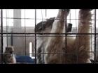 Rescue Me - Animal Rescue Sofia