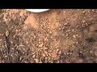 Detech coil 15/8 mono  for Minelab GPX - test Australia 02
