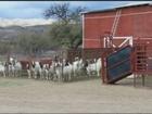 Arizona*(Organic farms for sale)*505-715-6595